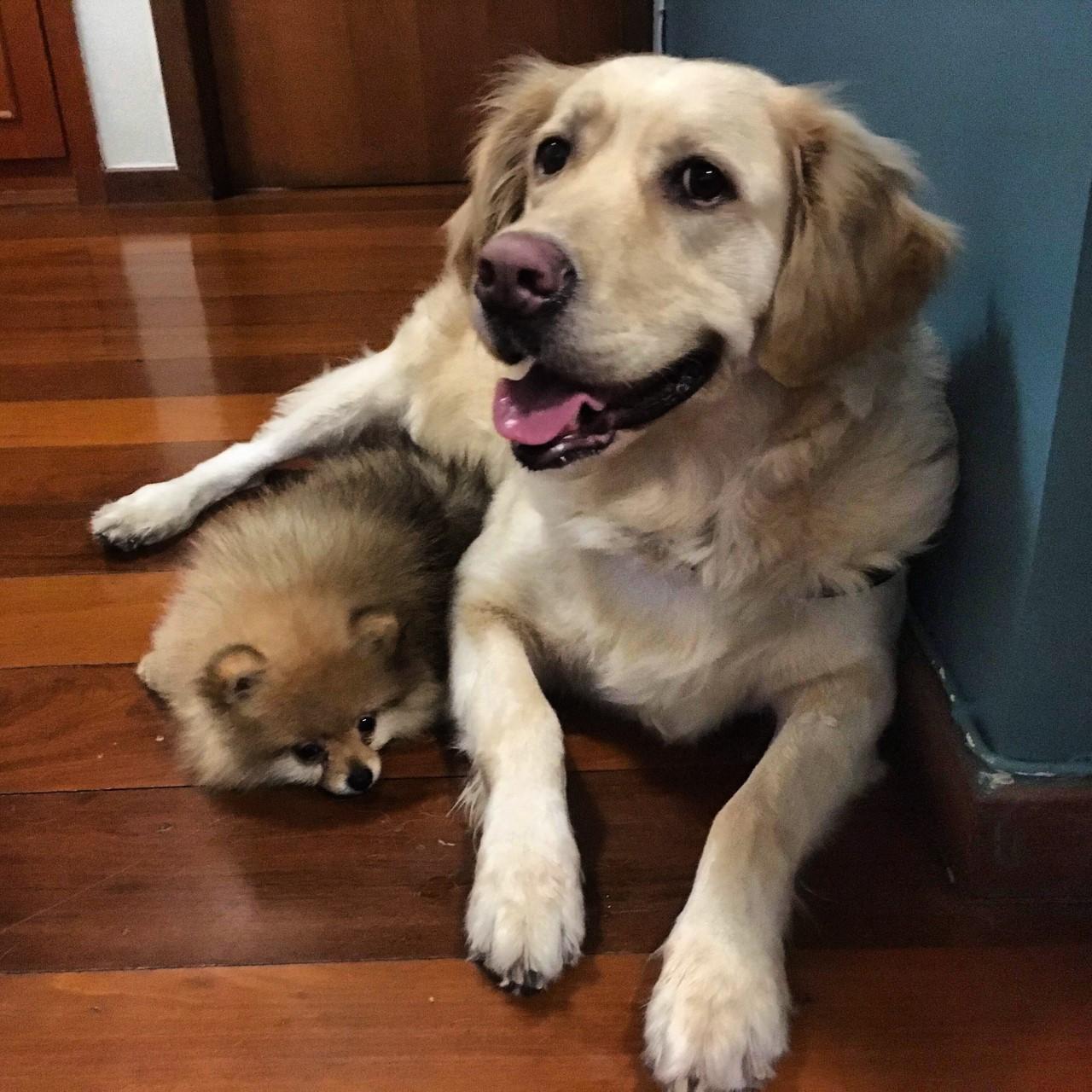 Pet Lover - Fonte: arquivo pessoal