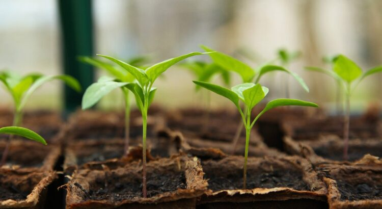Presentes que me dou: Plantas & Flores (5) - Pixabay
