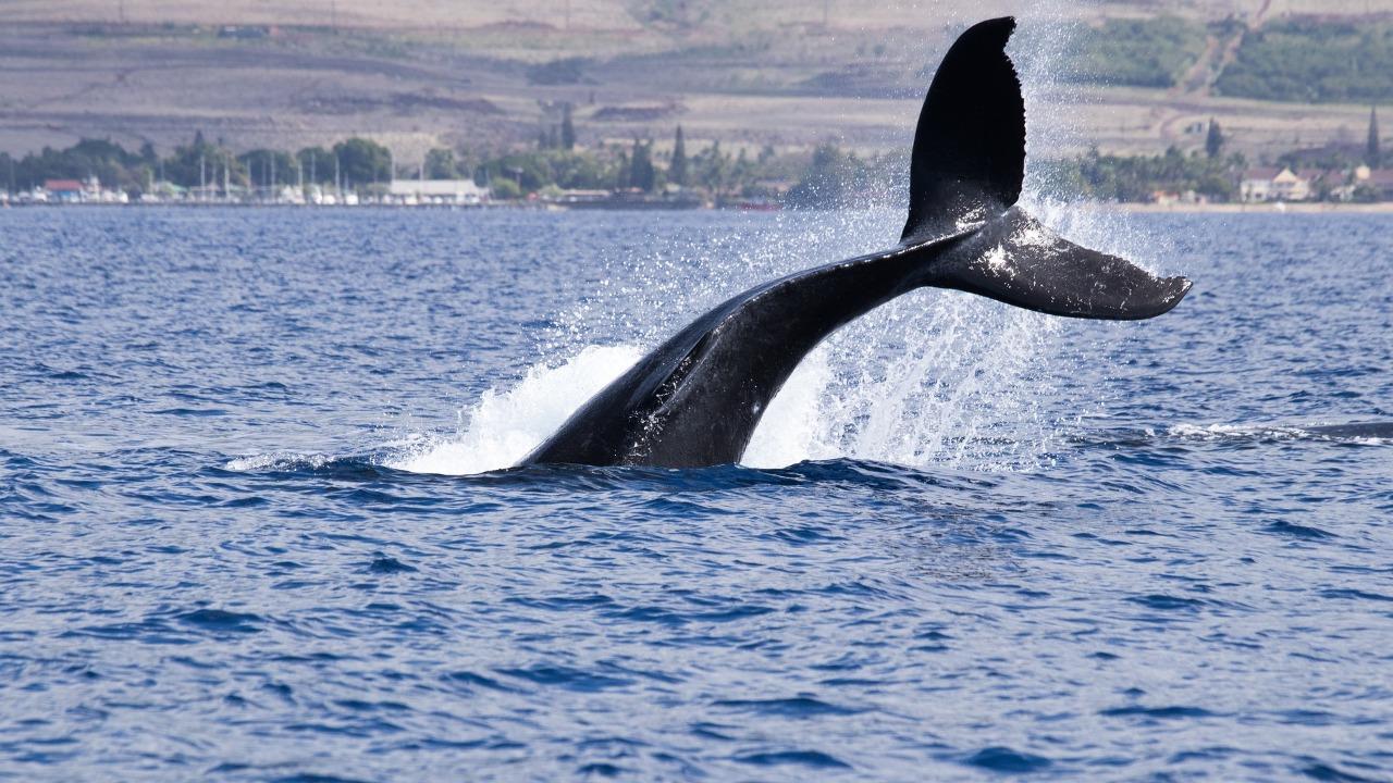 Avistagem de Baleias: de olho no mar de Cumuruxatiba - Foto: Pixabay